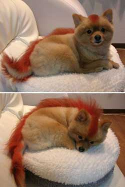 the_real_firefox___by_diiih.jpg
